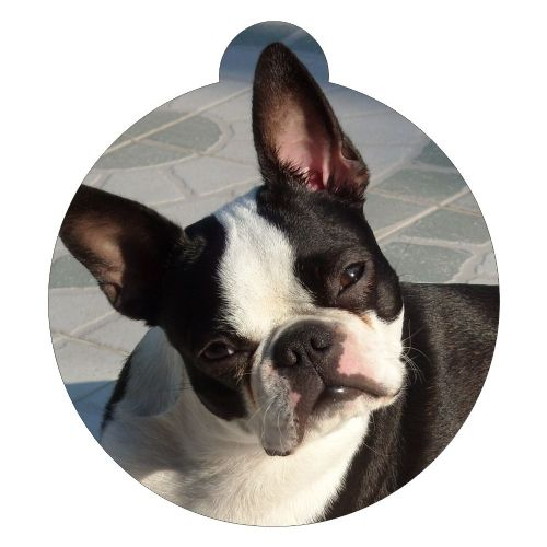 Boston Terrier Picture ID tag